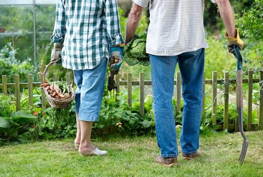 creer-potager-jardin
