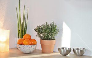 Plan de travail d'une cuisine avec des fruits et des plantes